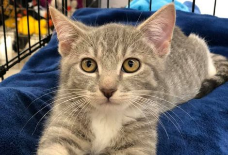 Rescue Spotlight: Kitty Kat Haven and Rescue